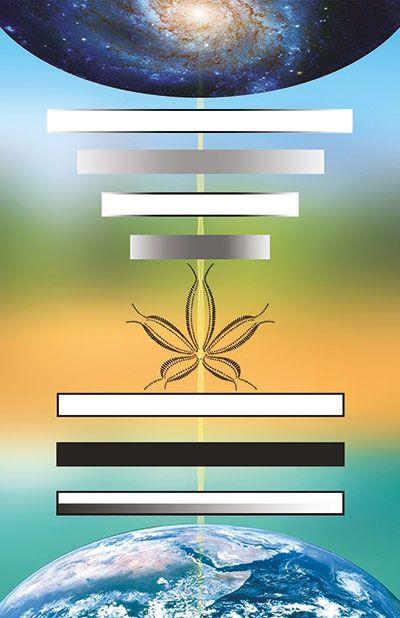 sette fasi ortho-bionomy